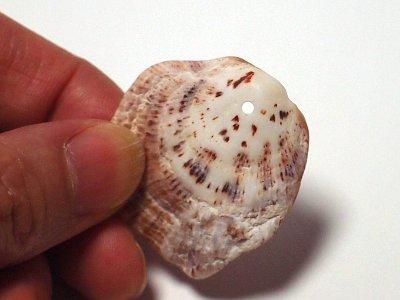 貝殻に穴を開ける